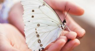 Dotyk Motyla